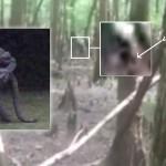 Una mujer de Carolina del Sur (EE.UU) afirma haber fotografiado un hombre lagarto. Otro testigo también grabó lo que cree es el hombre lagarto.