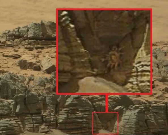 ¿Cangrejo en Marte?