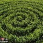 Crop circle en Holanda - Septiembre 2015