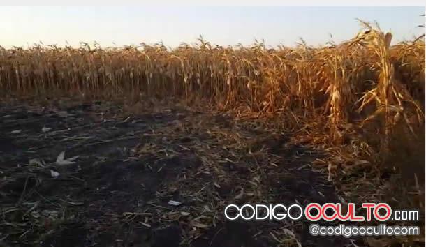 Crop circle en Rusia