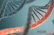 Científicos descubren 238 genes que podrían extender la vida humana
