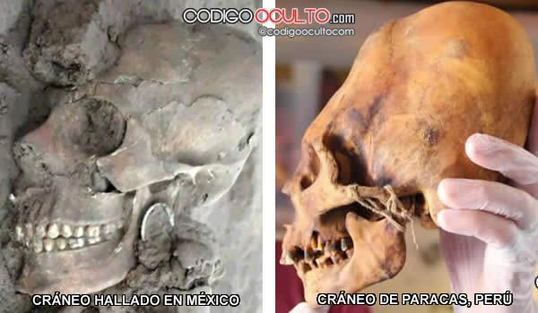 Comparación entre uno de los cráneos hallados en México y un cráneo de Paracas, Perú.