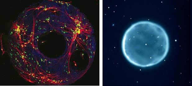 Comparación entre una Célula y una Nebulosa del Universo