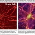 ¿Es posible que el Universo sea parte de un gran organismo vivo?