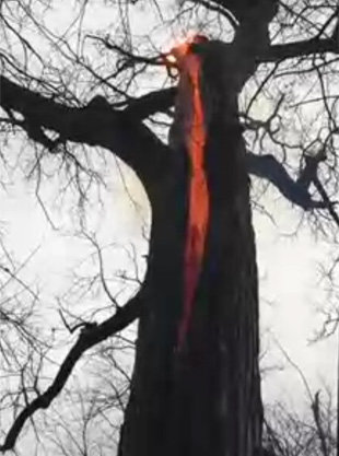 De manera misteriosa un árbol arde en su interior.
