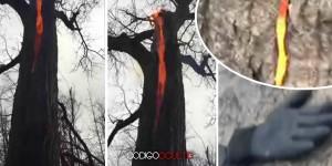 Excursionistas graban inexplicable vídeo de un árbol ardiendo en su interior
