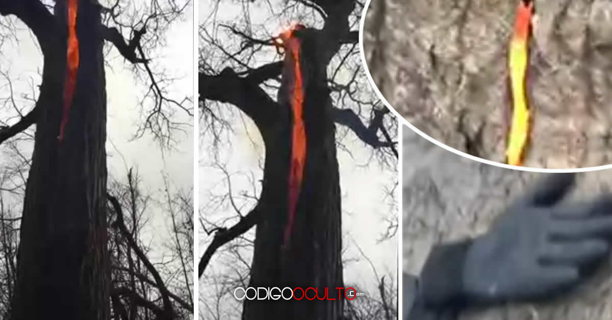 Excursionistas graban inexplicable vídeo de un árbol ardiendo en su interior