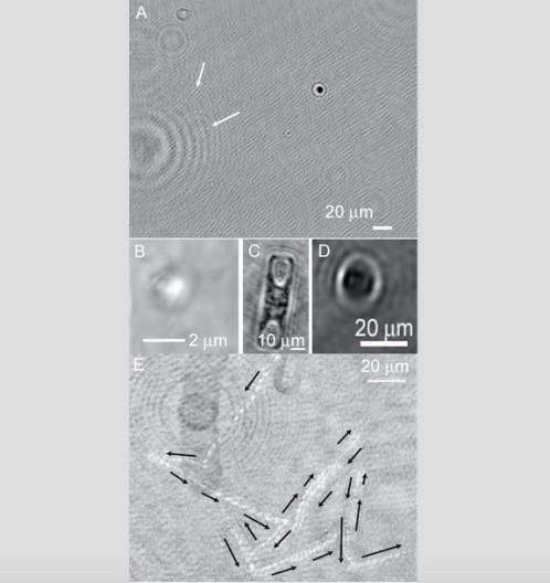 Ejemplos de organismos y sus movimientos detectados en Groenlandia, vistos en un microscopio holográfico.