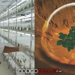 NASA tiene planeado llevar papas peruanas a Marte