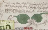 Manucristo Voynich: Descarga gratis una versión digital