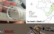 La relación entre el virus Zika y el mosquito genéticamente modificado