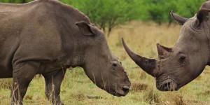 Fotografías de una especie próxima a extinguirse