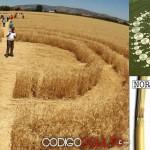 Algunos hechos científicos de los crop circles que muy pocos conocen