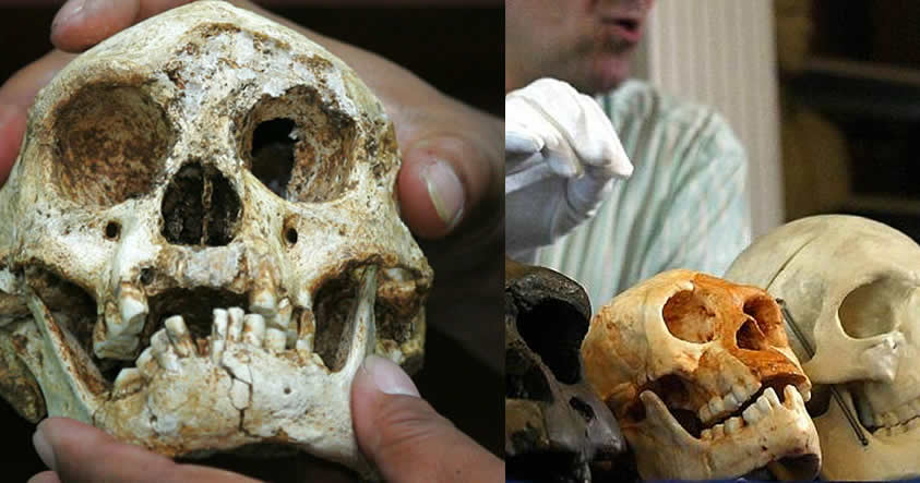 Científicos lo confirman: «Los 'Hobbits' no eran humanos»