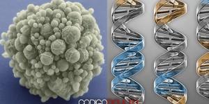 Vida sintética: Crean genoma artificial a partir de un organismo vivo