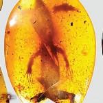 Descubren camaleón de 99 millones de años fosilizado en ámbar