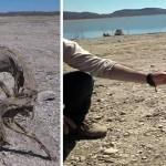 Un extraño cadáver momificado es hallado en Chihuahua