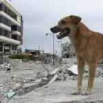 ¿Los animales pueden predecir los terremotos? Estudio científico sugiere que sí