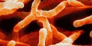 Estudio revela que aún falta descubrir el 99.999 por ciento de los seres vivos