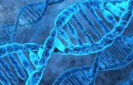 Misteriosamente el código genético dejó de evolucionar hace millones de años