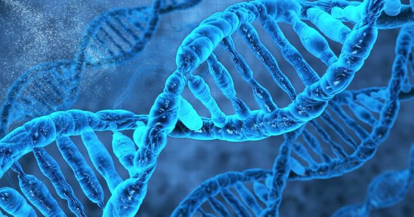 Misteriosamente nuestro código genético dejó de evolucionar hace millones de años