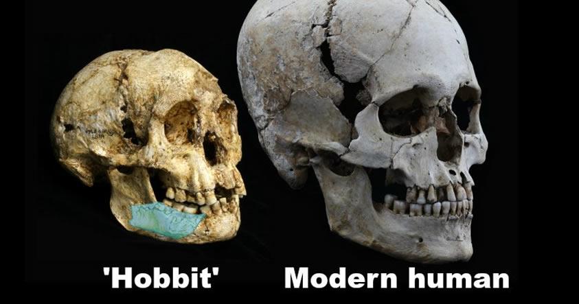 Científicos encuentran los restos de un «Hobbit» de hace 700.000 años
