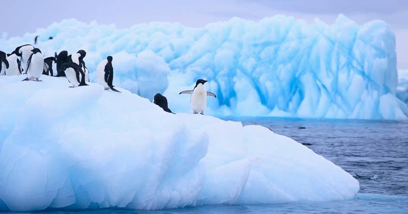 Estudio podría explicar ausencia de aumento de temperatura del océano en la Antártida