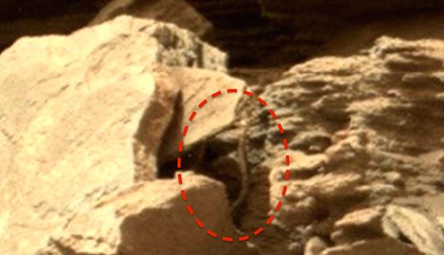 ¿Vida extraterrestre o una una roca con peculiar forma?