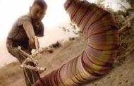 ¿Existe un gusano letal bajo el Desierto de Gobi? El Enigma «Allghoi Khorhoi»
