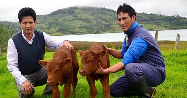 Científicos de Perú logran clonar una vaca a partir de células de la oreja de otra