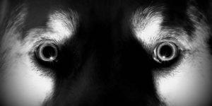 Cómo adiestrar a tu perro para detectar fantasmas