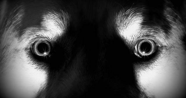 ¿Cómo adiestrar a tu perro para detectar fantasmas?