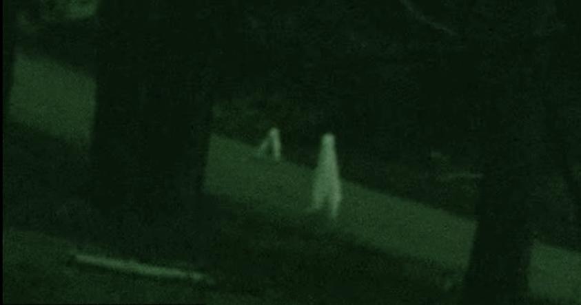 Los vigilantes nocturnos: ¿Qué son estas criaturas que recorren los bosques de California?