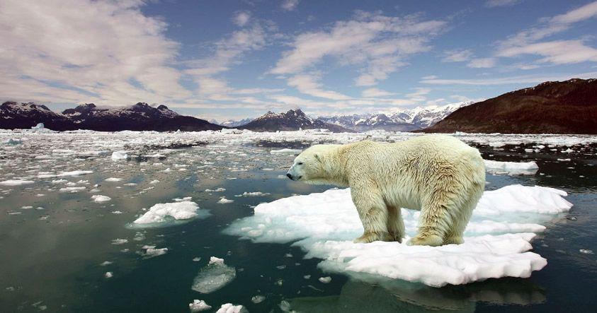 Alarmante: El Polo Norte está a 36 grados más caliente de lo que debería estar ahora