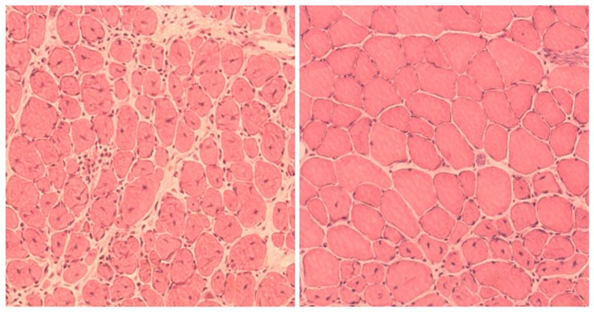 La reprogramación celular se ha utilizado para revertir el envejecimiento en animales vivos por primera vez