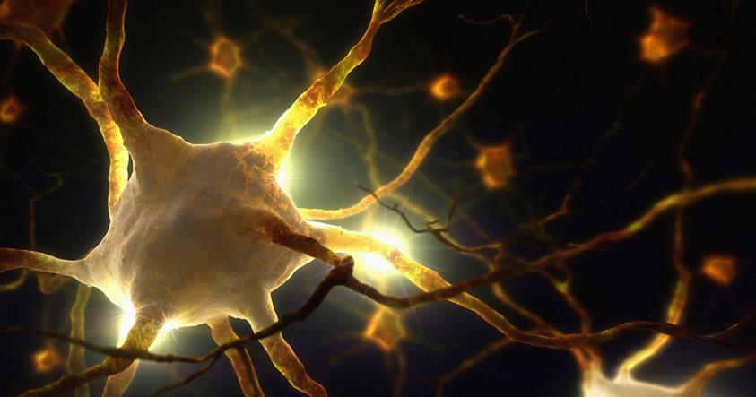 Nueva evidencia sugiere que el Parkinson podría comenzar en el intestino, no en el cerebro