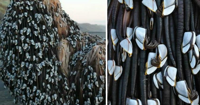 El «Monstruo de Muriwai»: Extraña criatura aparece en playa de Nueva Zelanda