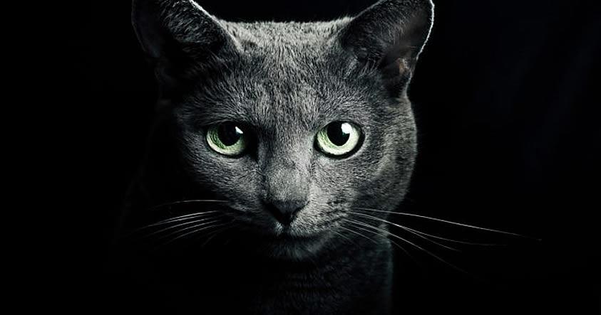Gato: Protector de su hogar contra fantasmas y espíritus negativos