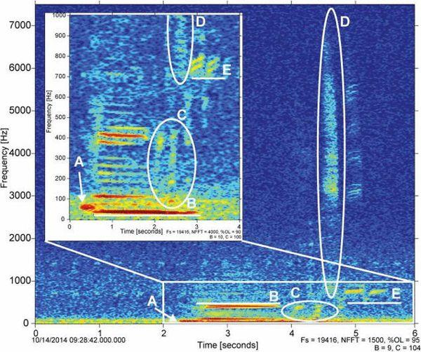 Representación visual de la grabación, que muestra cinco partes distintas.