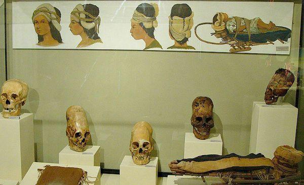 Vitrina con cráneos deformados en el Museo Regional de Ica, Perú.