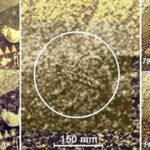 NASA ha ocultado ciudades y seres vivos en Venus
