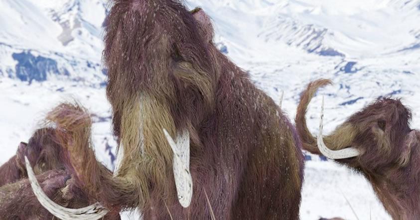 Científicos de Harvard dicen que están a solo 2 años de «resucitar» al Mamut lanudo