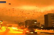 Algo grave podría ocurrir en EE.UU: Miles de pájaros negros invaden Houston
