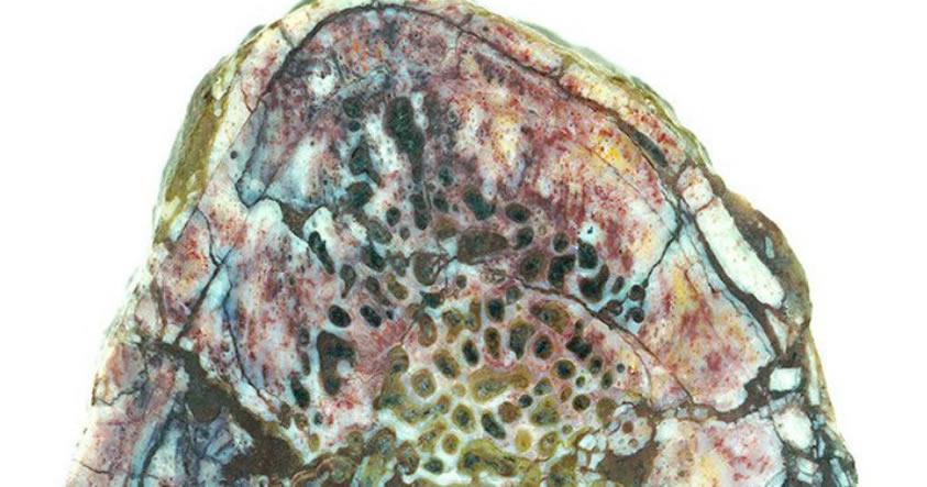 Descubren tejido blando dentro de un hueso de dinosaurio de 195 millones de años