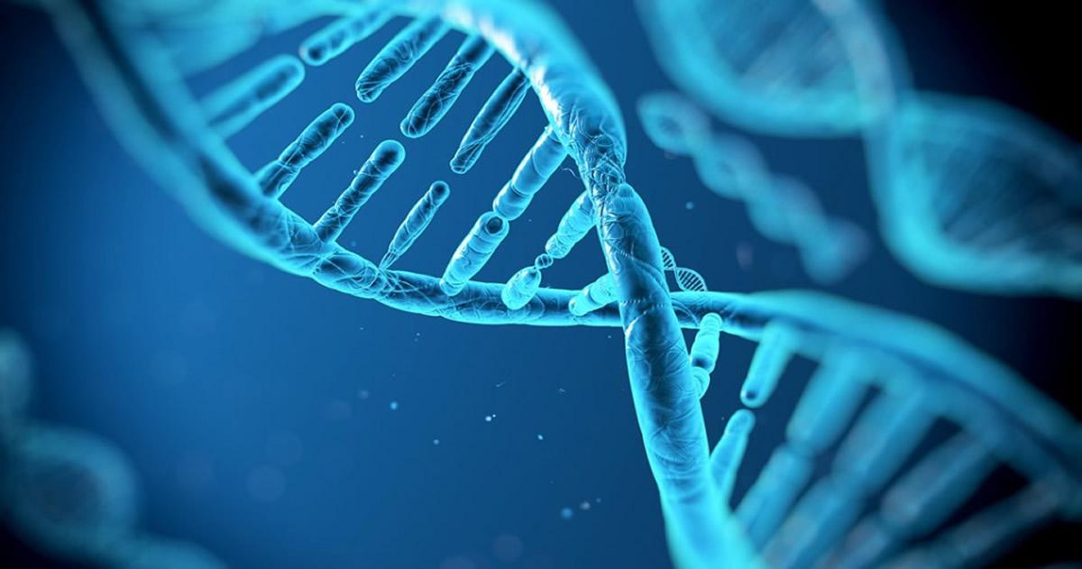 Científicos crean un ordenador basado en nuestro código genético