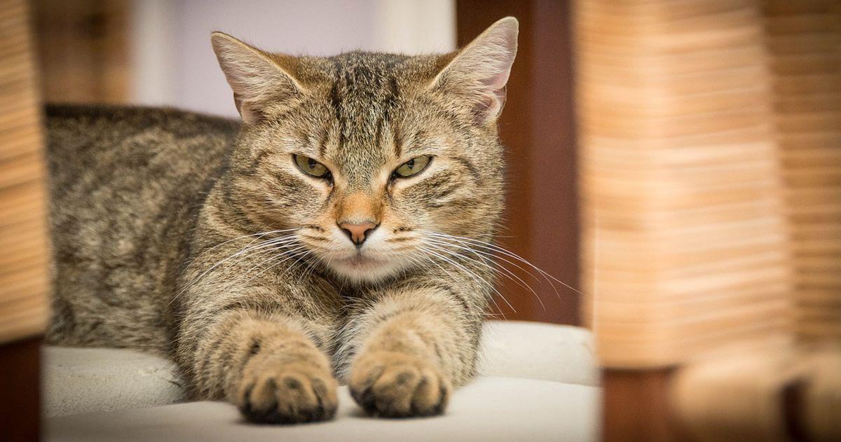 Estudio revela que los gatos prefieren la compañía de los humanos a la comida