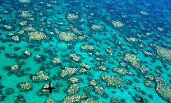 Se han realizado reconocimientos aéreos y submarinos del arrecife, que han llegado a la conclusión de que dos tercios de los corales se han visto afectados por la decoloración en masa por segunda vez en 12 meses.