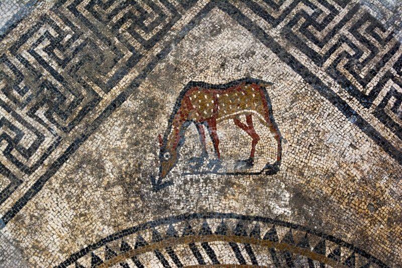 Este es el cervatillo identificado por los arqueólogos en el mosaico.