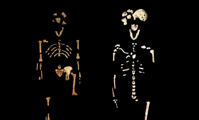 """Comparativa del esqueleto de """"Lucy"""" (izquierda) y """"Neo"""" (derecha)."""
