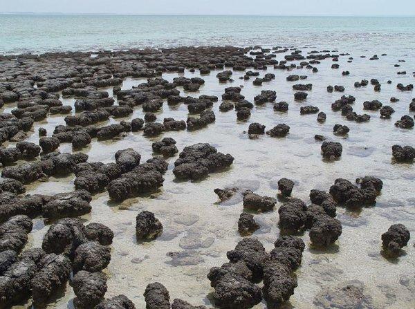 Existen en varias partes del planeta estructuras antiguas denominadas estromatolitos, que se cree son los restos de antiguas colonias